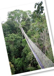 Amazon rainforest canopy walkway at ACTS in Peru